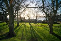 Soluppgång skuggor, konturer, träd Royaltyfri Foto