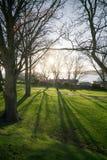 Soluppgång skuggor, konturer, träd Arkivfoto