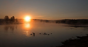 Soluppgång som ändå reflekterar ottamist på trumpetaresvanar och kanadensisk gäss i Yellowstonet River i Hayden Valley arkivbilder