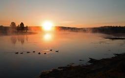 Soluppgång som reflekterar till och med ottamist på kanadensisk gäss i Yellowstonet River i Hayden Valley Yellowstone NP arkivbild