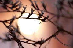 Soluppgång till och med gräs royaltyfria bilder