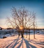 Soluppgång till och med torrt träd med skugga på snöig royaltyfri fotografi