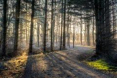 Soluppgång till och med träden Royaltyfria Bilder