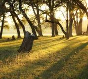 Soluppgång till och med treesna Royaltyfria Bilder