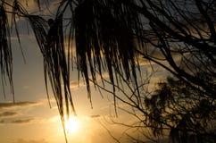 Soluppgång till och med treesna Royaltyfri Foto
