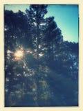 Soluppgång till och med treesna Royaltyfri Bild