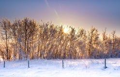 Soluppgång Treeline Fotografering för Bildbyråer