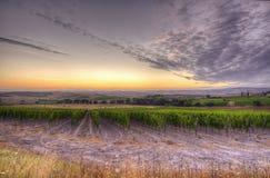 soluppgång tuscany Royaltyfria Bilder