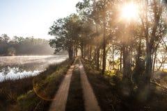 Soluppgång vid en sjö i den Kanha nationalparken, Indien Arkivfoton