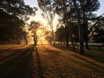 Soluppgången i det Macquarie universitetet Arkivfoto