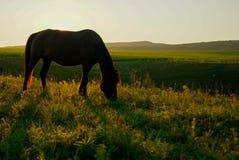 Soluppgången på hästrygg Arkivfoto