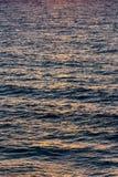 Soluppgångfärger på havsvågor Arkivbild