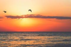 Soluppgångfåglar royaltyfri foto