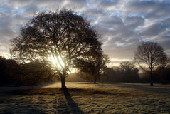 Soluppgångfriday trän Arkivbilder