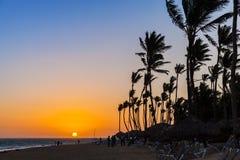 Soluppgånglandskap av Atlantic Ocean med palmträd Royaltyfri Bild