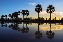 Soluppgånglandskap med sockerpalmträd på risfältfältet i morgon Mekong delta, Chau Doc, An Giang, Vietnam arkivfoto