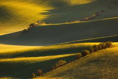 Soluppgånglinjer och vågor med träd på våren Royaltyfri Foto