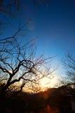 Soluppgångljus mellan filialerna på våren Royaltyfri Fotografi