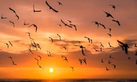 Soluppgångmagi - Durban, Sydafrika Arkivfoton