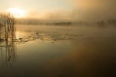 Soluppgångmist på floden målade i sepia Royaltyfria Foton
