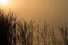 Soluppgångmist på floden målade i sepia Fotografering för Bildbyråer