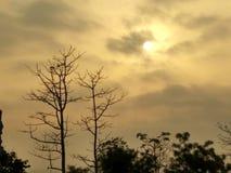 SoluppgångPic med trädet och det svarta molnet arkivfoto
