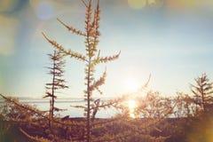 Soluppgångplats arkivfoton