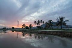 Soluppgångrad av kokosnöten i morgonen Royaltyfria Bilder