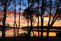Soluppgångreflexioner och Casuarinakonturer på lagun Arkivfoton