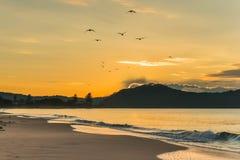 SoluppgångSeascape med Seagullkonturer i flykten royaltyfri bild