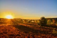 Soluppgångsolnedgång i heden för LÃ-¼neburg arkivbilder