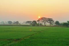Soluppgångträdfält Royaltyfri Bild