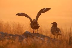 soluppgångvälkomnande Royaltyfri Foto