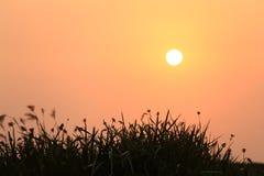 Soluppgång och växtkontur Fotografering för Bildbyråer