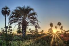 Soluppgång på den Palmar nationalparken för El, Argentina Arkivfoto
