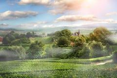 Soluppgång på vingård i Frankrike Royaltyfria Foton