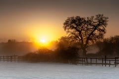 Soluppgång över ett snöig fält Royaltyfria Foton