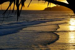 Soluppgångglöd över havet med ett tropiskt träd i förgrunden Arkivfoto