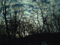 Soluppsättning till och med träden royaltyfria bilder