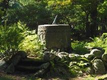 Solur Dias i trädgård Arkivbild