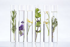 Solution of medicinal plants and flowers - Stock Photo