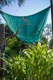 Soluzione di tela cerata che impedisce le piante che si asciugano il calore nell'estate che dà loro ombra, tacchino immagini stock