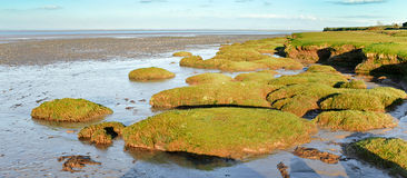Solway firth salt marsh Stock Image