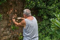 1 som arbeta i trädgården Arkivbilder