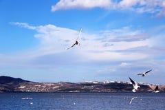 som att flyga tagna bildjpeg-seagulls var Arkivbild
