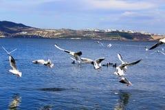 som att flyga tagna bildjpeg-seagulls var Arkivbilder