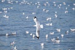 som att flyga tagna bildjpeg-seagulls var Royaltyfri Bild