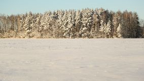 som bakgrund är kan använda vintern för illustrationen temat Fält och skog i det insnöade soliga vädret och den stora frosten Royaltyfri Bild