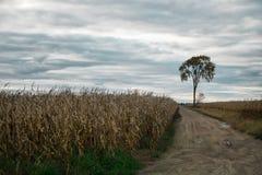 som bakgrund är kan konservera den använda ensamma treen för fältet royaltyfri bild