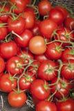 som bakgrund är kan tomaten använda wallpaperen Fotografering för Bildbyråer